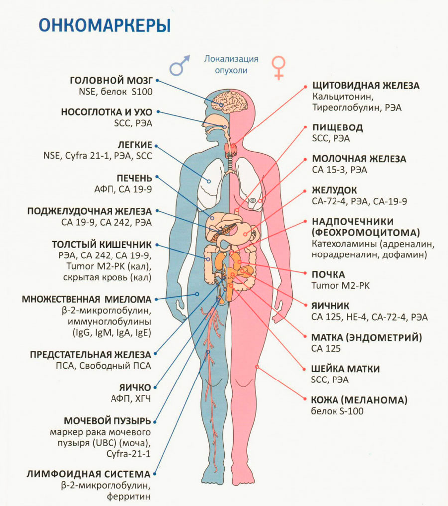 ubc fogyás tanulmány