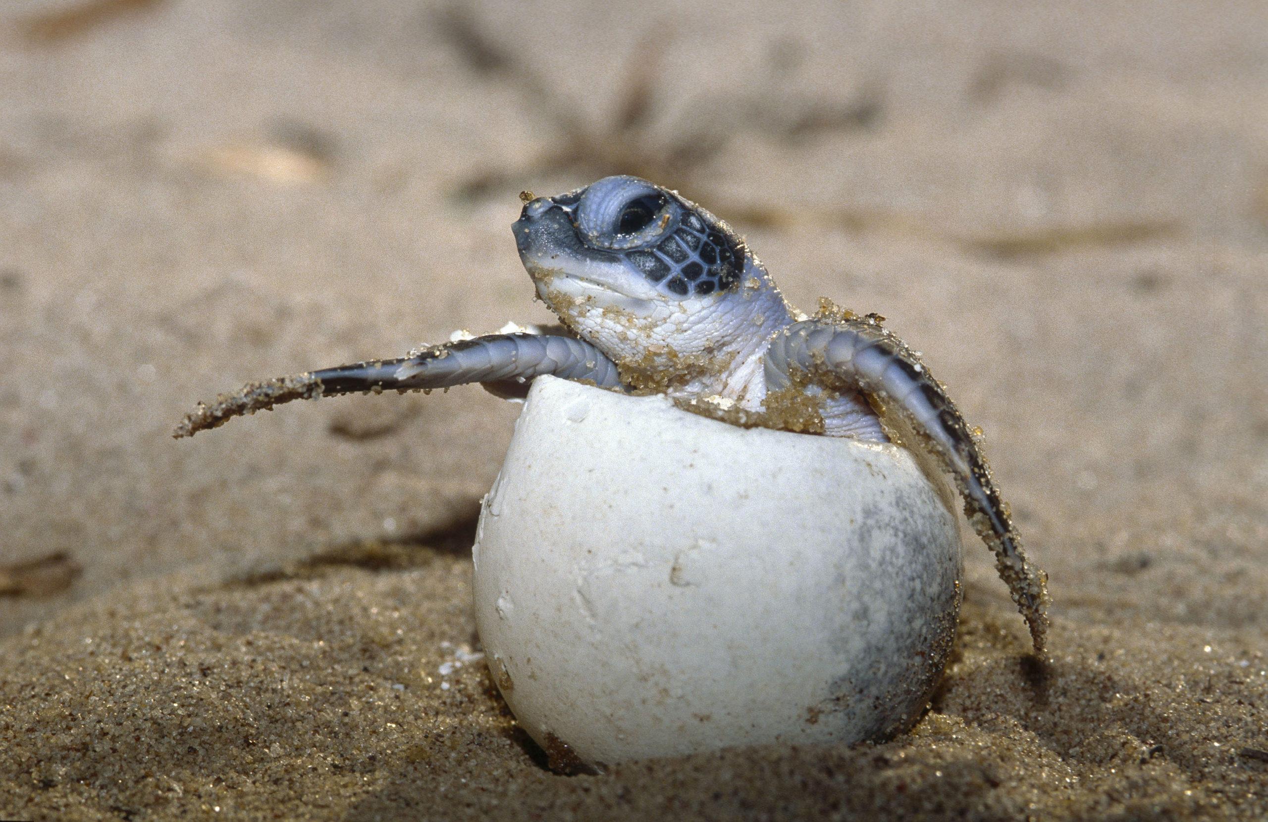 mikor fogyott a teknős? fogyás danville va